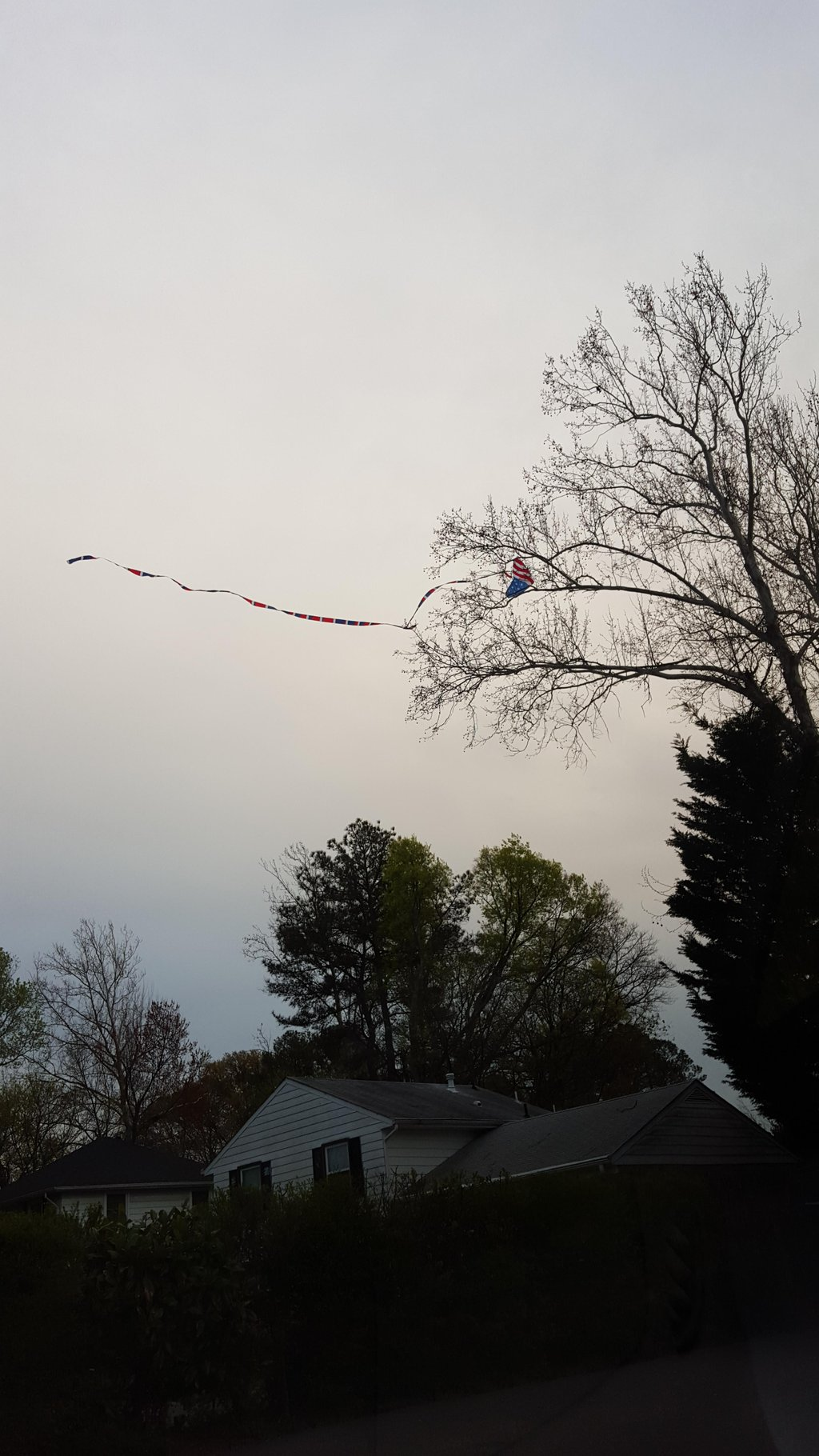 Kite flying was fun until…