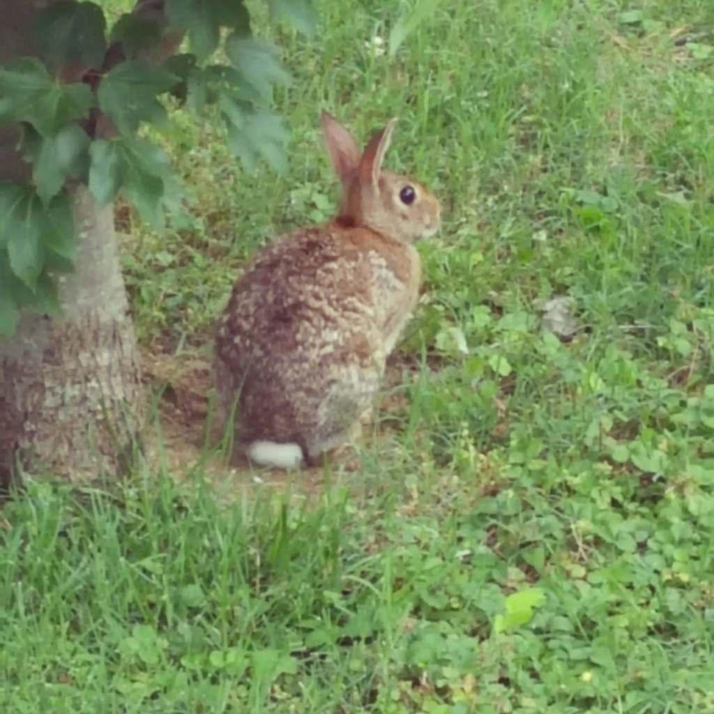 Brazen Bunny https://t.co/LS0YN8Z2yQ https://t.co/xBJ6MRM9b8
