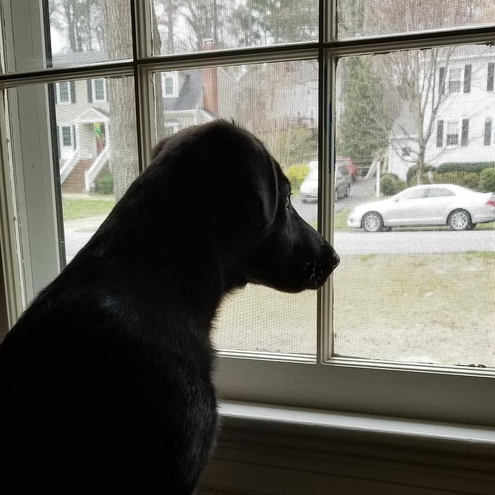 Puppy at window